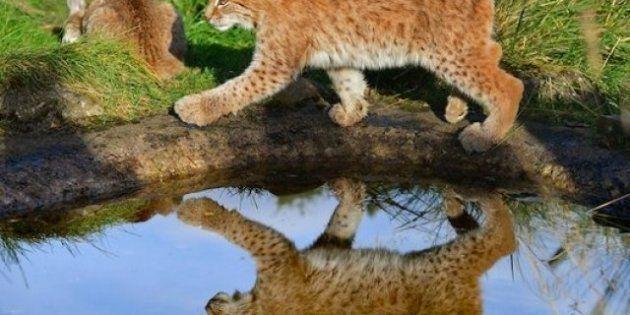 FOTOS: animales de la