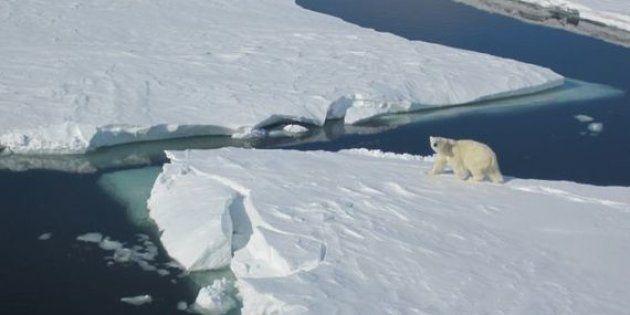 Cosas que hacer en el Ártico tras el Gran