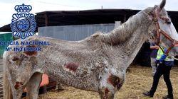 Hacinados, desnutridos, heridos: así tenían a perros y caballos en una
