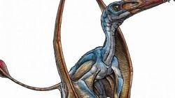 Descubierta en Argentina una nueva especie del primer reptil