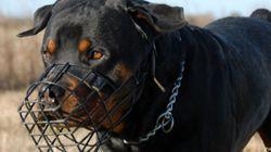 ¿Penas de cárcel para los dueños de perros