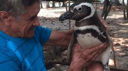 No te vas a creer lo que hace este pingüino cada