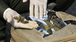 Encuentran dos toneladas de droga en un cementerio de