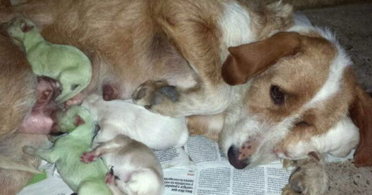 Por qué nacen perros verdes? (FOTOS, VÍDEOS) | El HuffPost