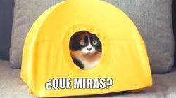 Fabrica una casa para tu gato con perchas y una
