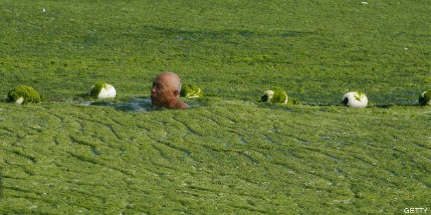 Playa cubierta de algas verdes en China: las fotos de