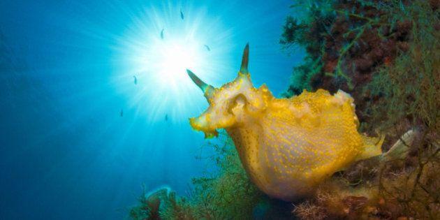 La caótica belleza del océano capturada en estas 15 impresionantes