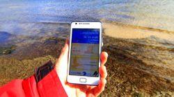La aplicación móvil que te permite reconocer aves sobre el