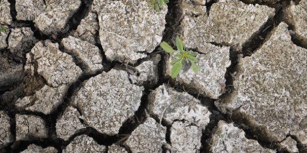 La sequía en EEUU irá a más en los próximos años, según un