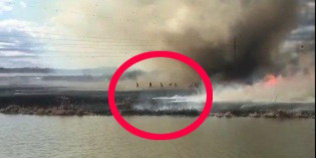 Un tornado de fuego sorprende a los