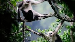 Las 100 especies más amenazadas
