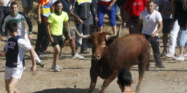 El Toro de la Vega termina con dos heridos, uno de ellos fotógrafo