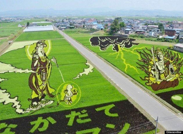 Campos de arroz con dibujos y geometrías en cultivos