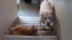 ¡No pasarás! Así atemorizan estos gatos a los perros