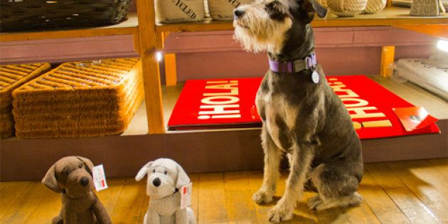 Los perros suman y no restan: Muji, Vinçon, Casa del