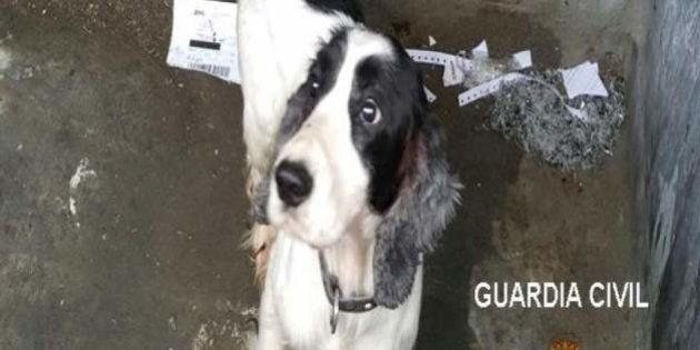 Detenido en Burgos por arrojar a su perro vivo a un