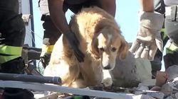 El perro que sobrevivió nueve días bajo los escombros de