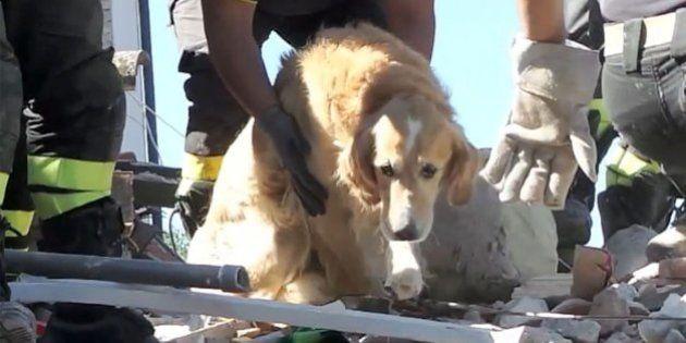Bomberos de Italia rescatan a un perro superviviente del terremoto de Italia