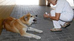 La perrita Maya se reencuentra con su dueña tras esperarla durante seis días en la puerta del