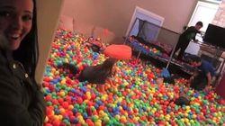 Llenar el salón de bolas puede ser la mejor idea del mundo