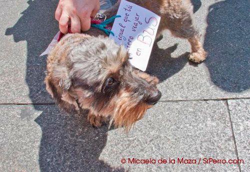 Quedada en Madrid para que los perros puedan ir en transporte