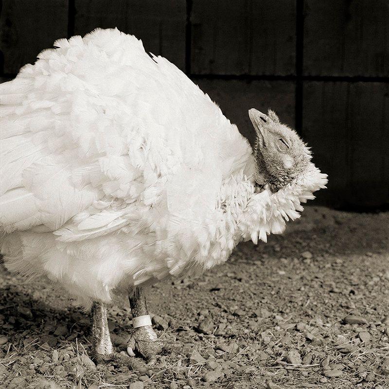 Fotos increíbles de animales ancianos en blanco y