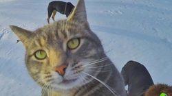 Hola, soy el gato Manny, me hago 'selfies' y lo peto en