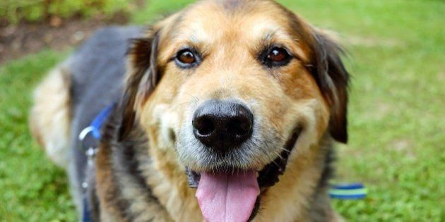 Los perros entienden las palabras y la entonación de las