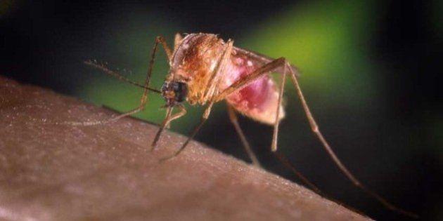 Acabemos con el paludismo para