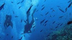 ¿Dónde hay más vida en el océano profundo? ¿En los