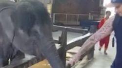 Graba sin querer el maltrato a este elefante en