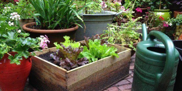 Practica 'urban farming'... o lo que es lo mismo, pon un huerto en tu