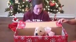 Felicidad máxima al recibir un perro por Navidad