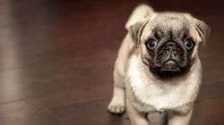 Tu perro es el rey de la casa y lo sabes: 21 detalles que lo