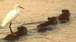 ¡Al agua patos! (y monos, y perros, y