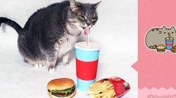 Recrea con su gata los famosos emoticonos de