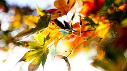 89 días de otoño por delante: ¿Por qué varía la fecha de las estaciones?