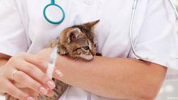 El Congreso acuerda rebajar IVA de los servicios veterinarios del 21 al 10