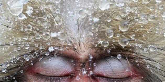 La flora y fauna ganadora de los premios de fotografía Veolia 2012