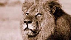 Un dentista de Minnesota mató al león