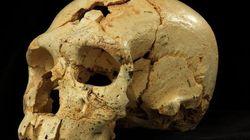 Hallan 17 cráneos en Atapuerca que aportan luz sobre los