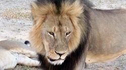 El asesino de Cecil culpa a los guías y cierra su