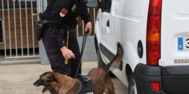 Operación Emperador: Perros policías encontraron el dinero negro de las mafias chinas