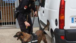 Perros policía olieron la fortuna en dinero negro de las mafias chinas