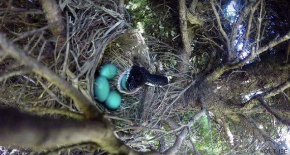 Un hombre graba un 'time-lapse' de un nido sin esperarse el espectacular