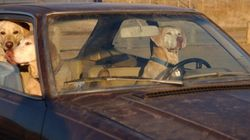 Dos detenidas en Torrevieja por dejar a tres perros en un coche a pleno