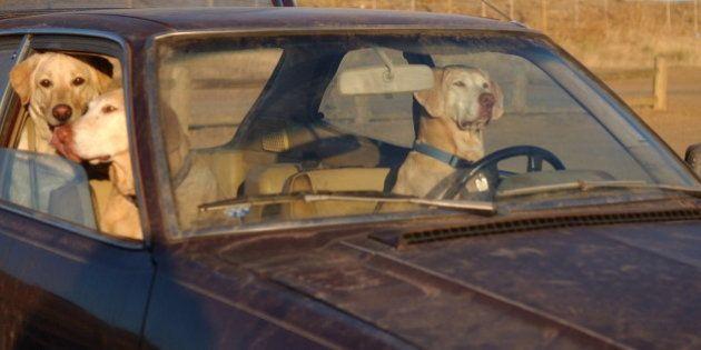 Dos detenidas por dejar a tres perros en un coche, uno muerto por el