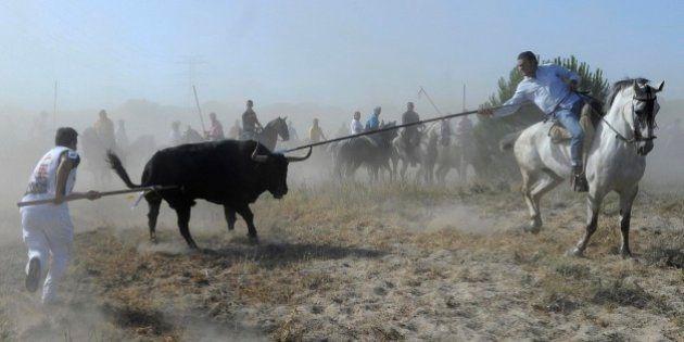 Los defensores del Toro de la Vega no descartan matar al animal pese a la