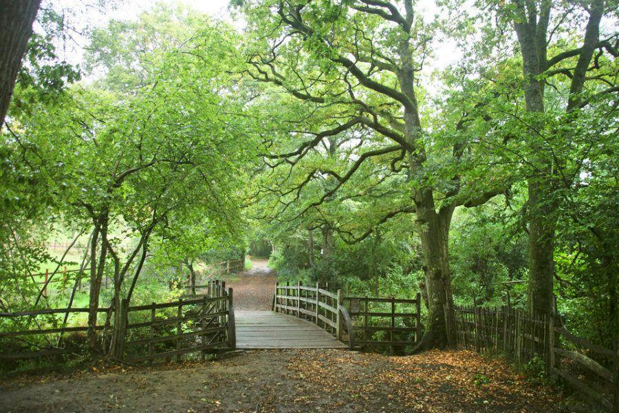 El lugar en el que se inspiró el bosque de 'Winnie the