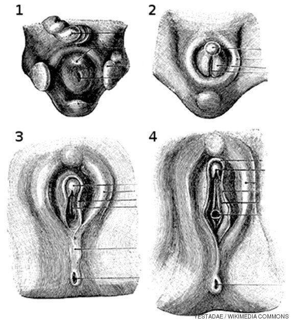 Anatomía: el clítoris y el cuerpo